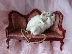 rats-couch