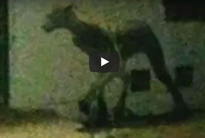 werewolf-argentina